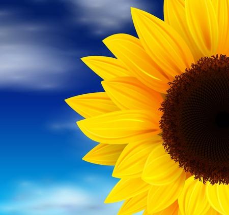zonnebloem: Zomer achtergrond, zonnebloem over de blauwe hemel. Stock Illustratie