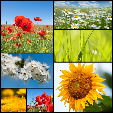 Beautiful spring flowers collection. Stock Photo - 11478691