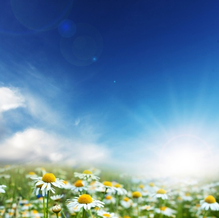Daisy flowers and sunny day. photo