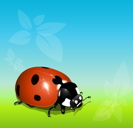 Summer background with ladybug, vector. Vector