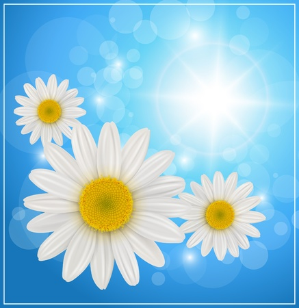 daisyflower: Sunny blue background with daisy flowers, vector. Illustration