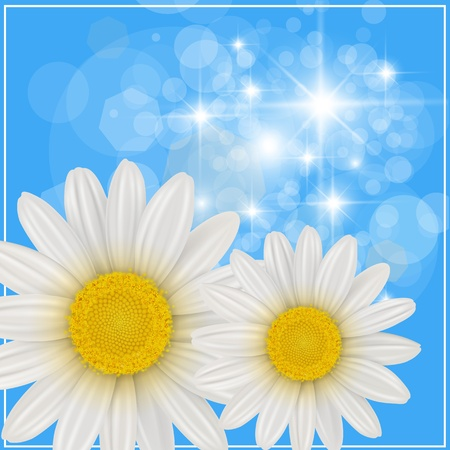 margerite: Summer background with white flowers. Illustration