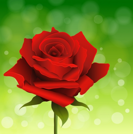 Red rose on green shiny background Vector
