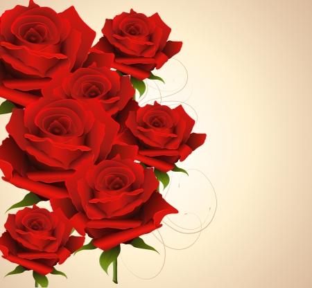 wild rose: Elegant background with roses