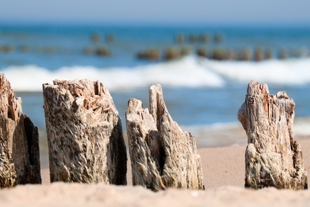 baltic sea: Baltic sea coast - wooden breakwaters closeup.
