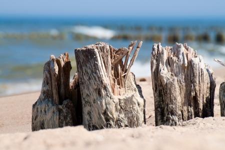 breakwaters: Baltic sea coast - wooden breakwaters closeup.