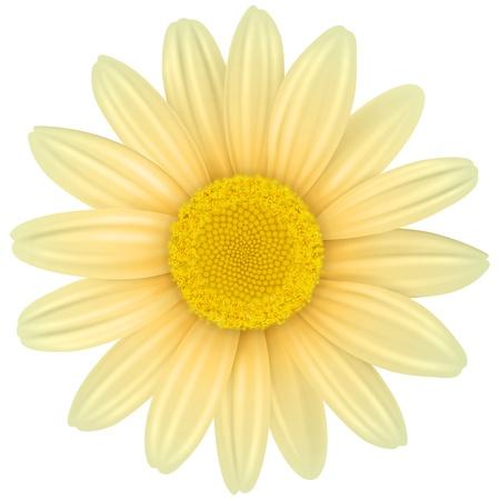 Flower isolated,  illustration Stock Vector - 20344018