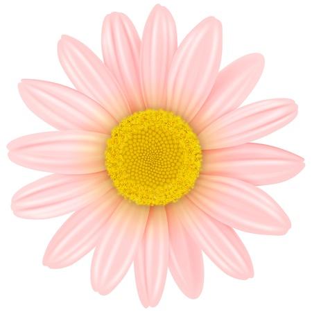 Flower isolated,  illustration. Stock Vector - 20344012