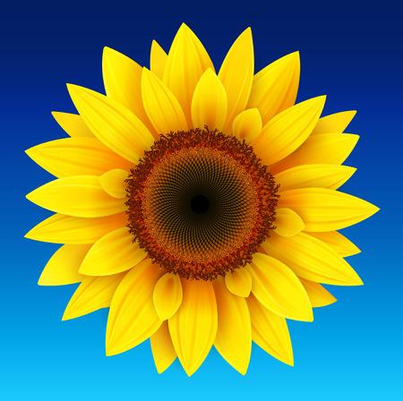 Sunflower background, yellow flower over blue sky, vector illustration.