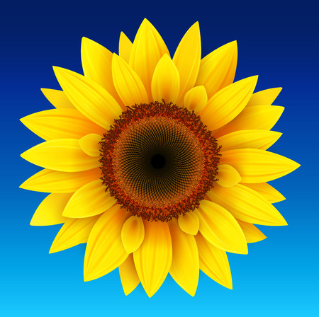 Sunflower background, yellow flower over blue sky, vector illustration.