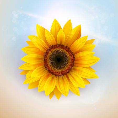 Flower Background with sunflower, vector illustration.