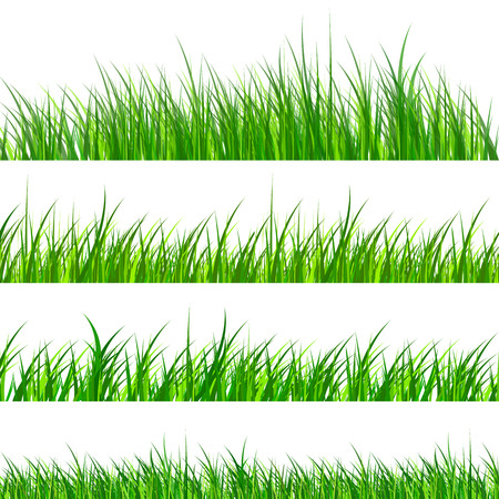hedges: Green grass samples isolated, vector illustration.