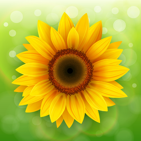 sunflower: Nature Background with sunflower over green bokeh background. Illustration