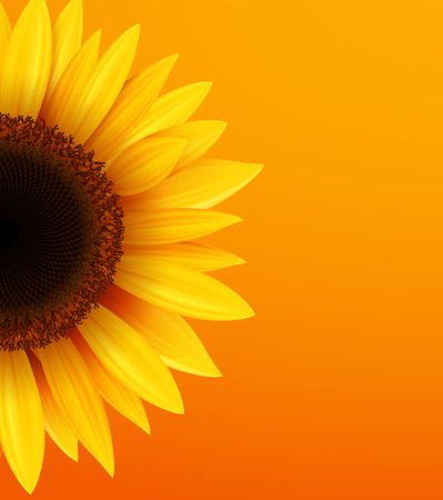 Sunflower background, yellow flower over orange background, vector illustration.