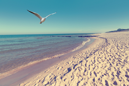 Baltic sea beach landscape with blue sea white sand and seagull