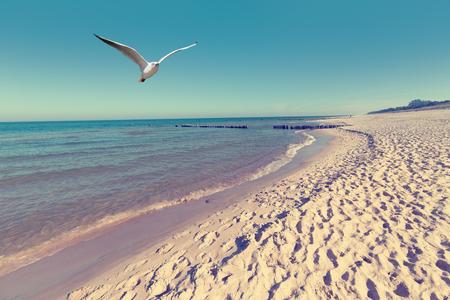 gaviota: paisaje de la playa del mar Báltico con el mar azul y la arena blanca gaviota