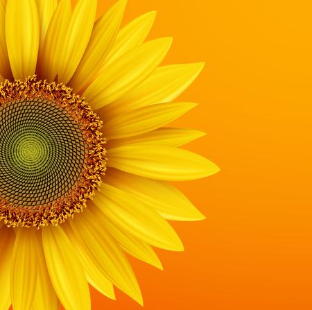 girasol: Fondo del girasol, flor amarilla sobre fondo naranja otoño, ilustración vectorial.