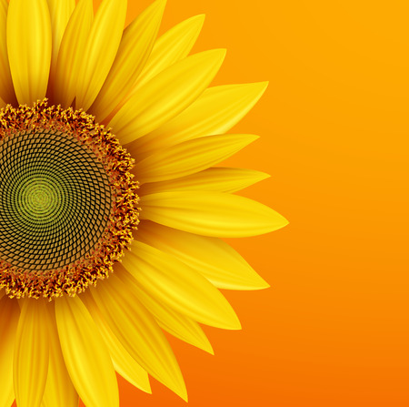 Sunflower background, yellow flower over orange autumn background, vector illustration.