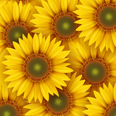 Sun flower: Sonnenblumen Hintergrund, Illustration. Illustration