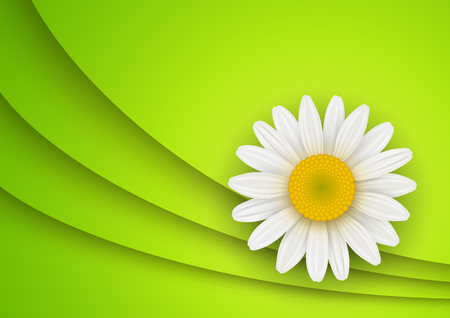 daisyflower: Green Background with white chamomile flower, vector illustration