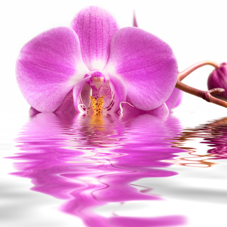 Pink orchid flower on water.