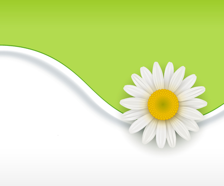 margerite: Green Background with white chamomile flower, vetor illustration Illustration