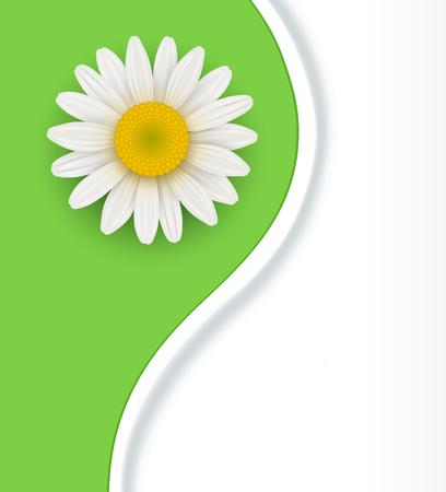 daisyflower: Green Background with white chamomile flower, illustration Illustration