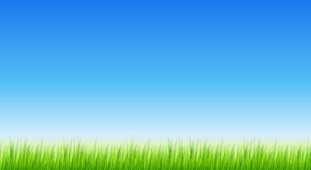 green background: Green grass vector background.