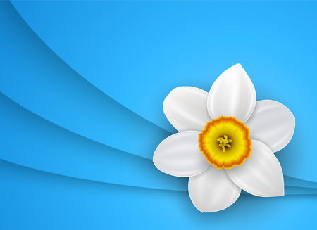 Background with white flower, vector illustration.