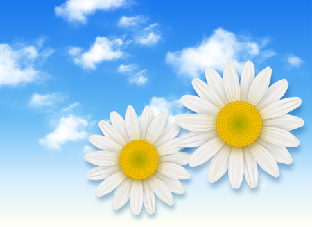 chamomile flower: Chamomile flower and blue sky with white clouds, summer flowers backgrounds Illustration