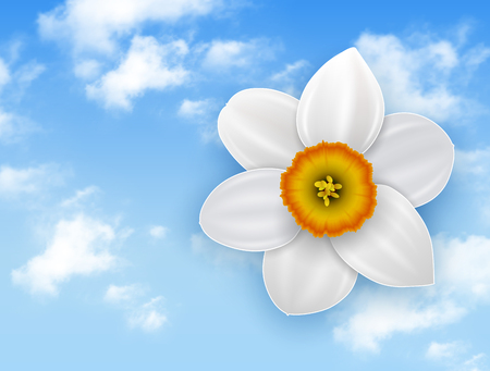 harmony nature: Summer flower background - narcissus white flower and blue sky with white clouds. Illustration