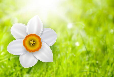 defocus: Summer flower background over green defocus backdrop, vector illustration.