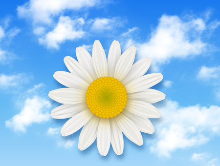 harmony nature: Chamomile flower and blue sky with white clouds, summer flower backgrounds
