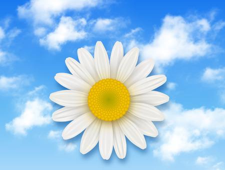 flores de manzanilla y cielo azul con nubes blancas, antecedentes de flores de verano Ilustración de vector