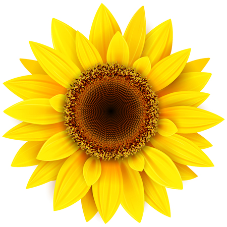 Sunflower flower isolated, vector illustration. Vettoriali