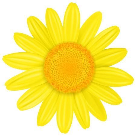 Yellow Daisy flower isolated, vector illustration. Illusztráció