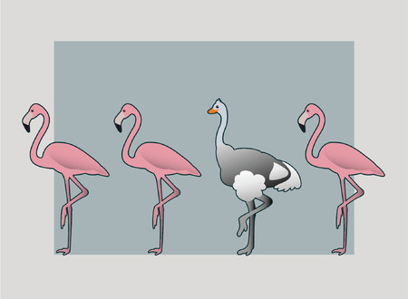 Ostrich blending with Flamingos  Illustration