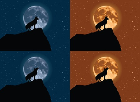 volle maan: Wolf met Volle Maan