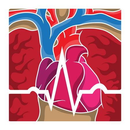 chest cavity: An ECG wave going over the chest cavity containing the heart, lungs and blood vessels