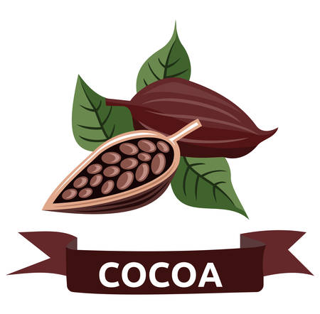 Vector illustration of the cocoa Vector