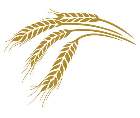 plant seed: Vector illustrations of the wheat