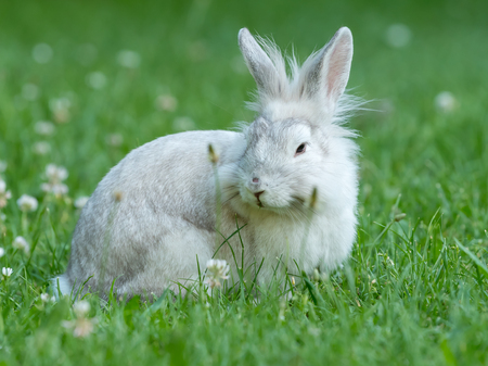 A young white rabbit is sittingin the green grass