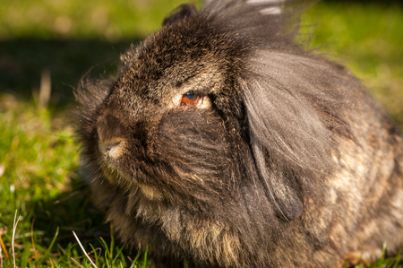 Portrait of a funny hairy rabbit in sunlight Stock Photo