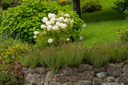 Una peonia blanca (Paeonia officinalis) en un jardín romántico en verano Foto de archivo