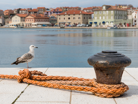 Rusty bollard, orange dew and a youg sea gull in the harbour of Cres (Croatia) Stock Photo