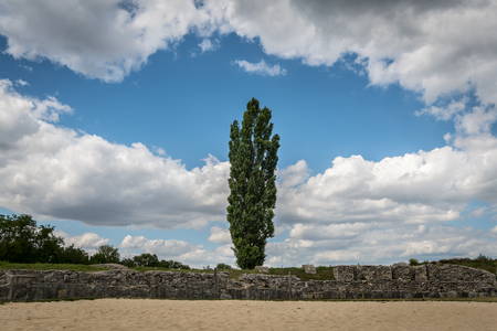 Fastigiate black poplar in front of old stone wall and dramatic sky in early summer