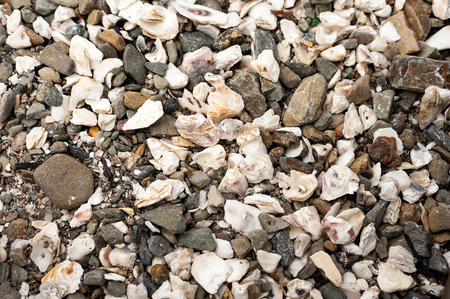 Closeup of oyster shells lying on a beach (Normandy, France) Archivio Fotografico