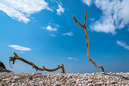 Two dead branches on a gravel beach on a sunny day in spring Archivio Fotografico