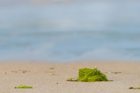 green water plant lying on a sandy beach