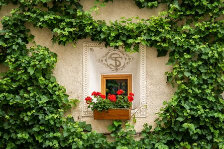 Red flowers in front of a small window of a very old house in Glurns (South Tyrol, Italy)